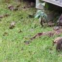 Trapping & Removal Of Five Ground Hogs – Gordonsville, TN
