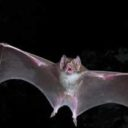 Removing Bats, Skunks, and Squirrels – Buffalo Valley, TN